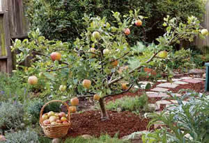 Small Fruit Tree