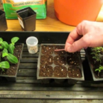 How To Start Seedlings